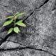 Bild einer kleinen Pflanze, die aus einer Mauerritze heraus wächst; Titelbild der Fortbildungsreihe Traumaspezifische systemische Therapie der Lehranstalt für systemische Familientherapie